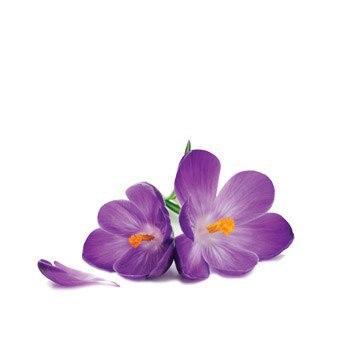 روغن گل بنفشه